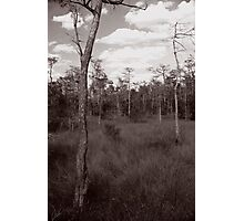 Trees - Big Cypress Preserve Photographic Print
