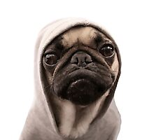 Pug - Cool Dog Photographic Print