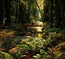 Along Fern Creek by Barbara  Brown