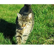 Decided cat heading towards you Photographic Print