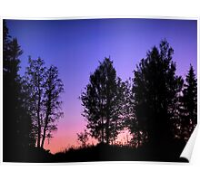 Sunset in forest Poster