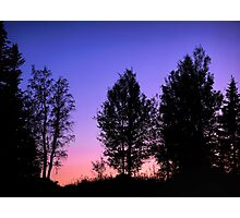 Sunset in forest Photographic Print
