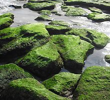 The Mossy Rocks by Mary Katherine Meadows