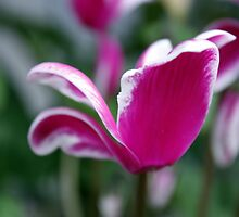 Pretty Pink by PPPhotoArt