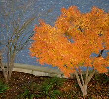 Sign of Things to Come for This Tree... by Carol Clifford