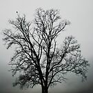 November Tree In Fog by Patricia Motley