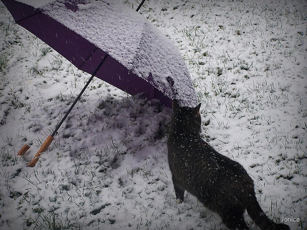 First Season Snow by Jonice