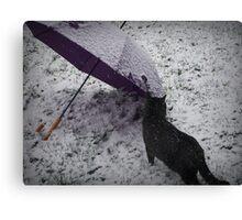 First Season Snow Canvas Print