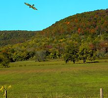 Cruz'en The Ozark Mountains by NatureGreeting Cards ©ccwri