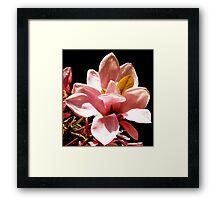 Marshmallow Delight Framed Print