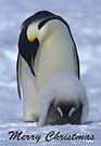 Emperor Penguins 12 - Merry Christmas Card by Steve Bulford