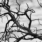 Branches by Vendla