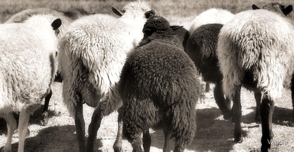 The Flock by Vendla