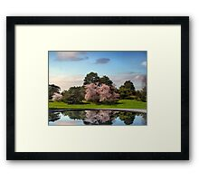 Cherry Tree Reflections Framed Print