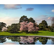Cherry Tree Reflections Photographic Print