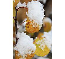 Autumn Snow Photographic Print