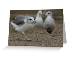 Sneaky Seagull On a Mission Greeting Card