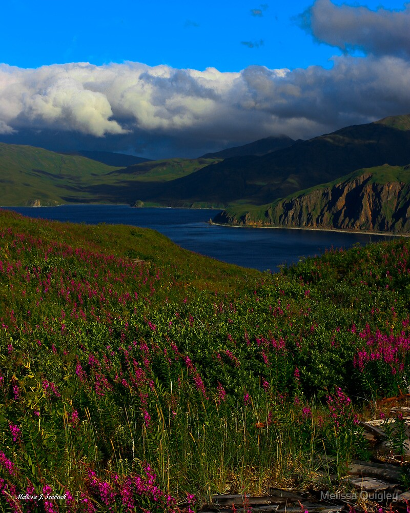 Island In The Bering Sea - Unalaska, Alaska by Melissa Seaback