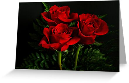 Red Roses by Sandy Keeton