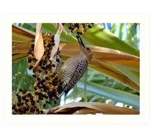 Gila Woodpecker & Berri~licious  Art Print