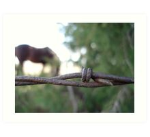 Barbed Wire With Horse Background Art Print