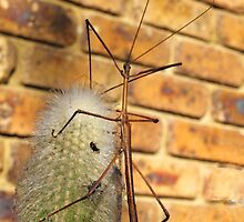 Stick Insect on Cactus by Bev Pascoe