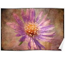 Textured Aster Poster