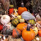 Thankful Harvest by shutterbug2010