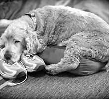 """""""they can't go anywhere without me if I'm sleeping on her sneakers...zzzz"""" by nadine henley"""