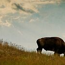 Bison 6 by Miles Glynn