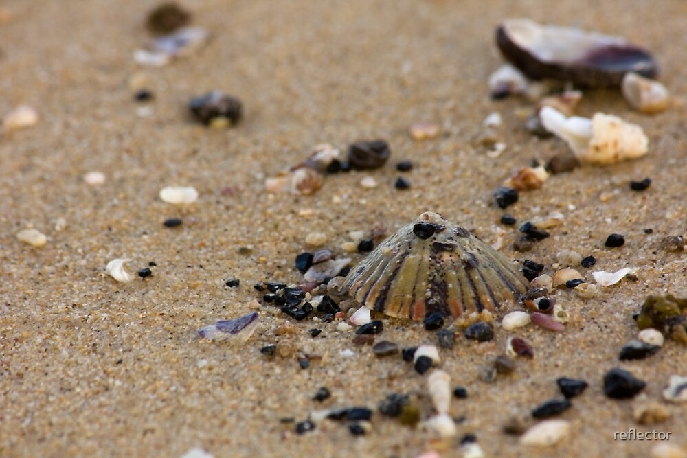 Tiger Shell And Pebbles - Beachcomber Series by reflector