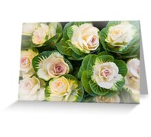 Flowering Kale Bouquet Greeting Card