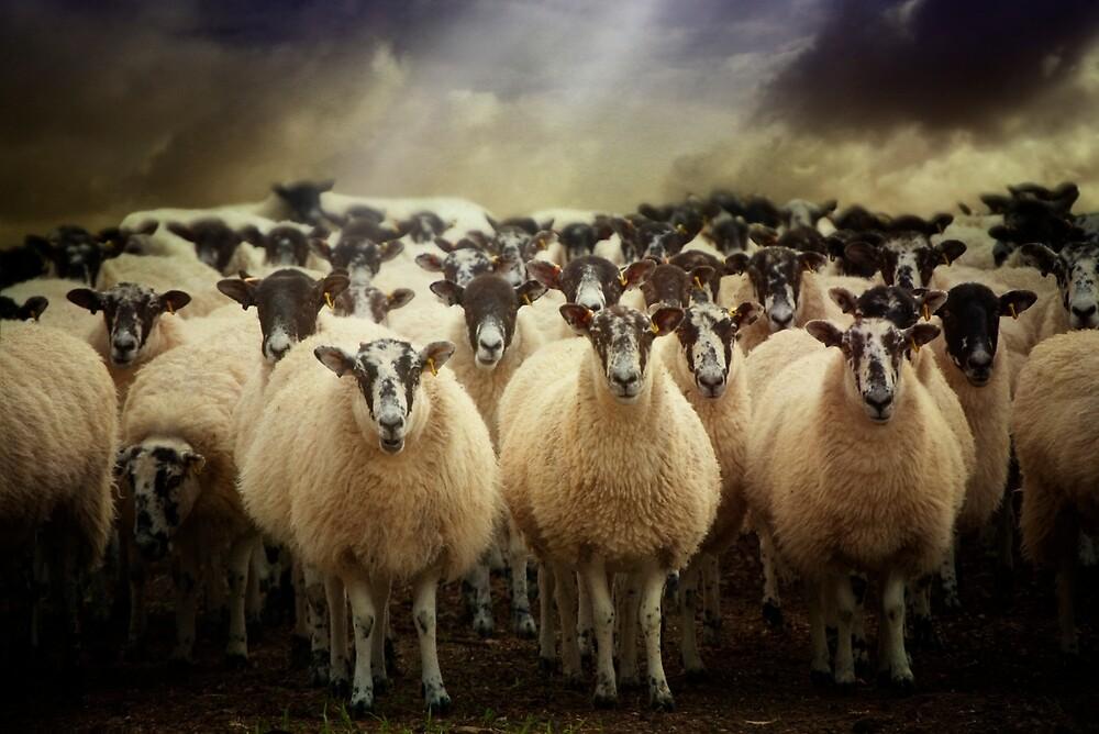 Sheepfest by ajgosling