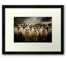 Sheepfest Framed Print