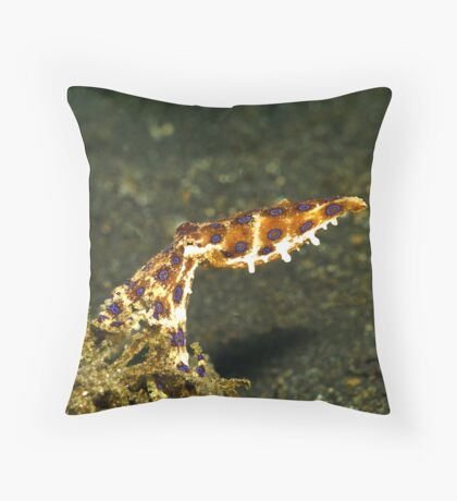midring blue-ringed octopus (hapalochlaena) Throw Pillow