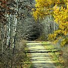 Late Fall Backroad by Geno Rugh