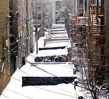Back Yard Uban Winter by psphotogallery