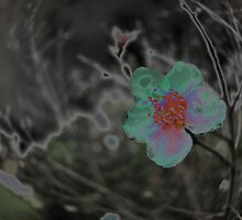 Rain Soaked Bloom by Jen Waltmon