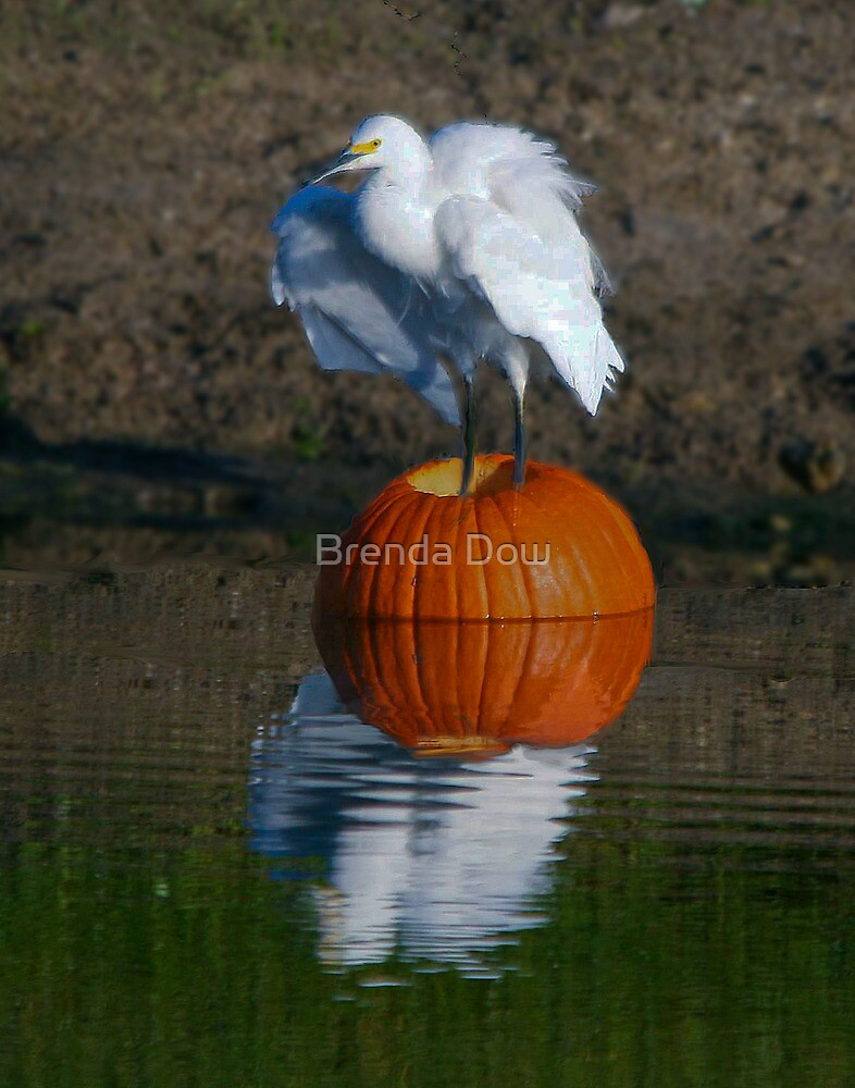 Giving Thanks.  . . . . . . for my new nest by Brenda Dow