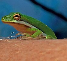Tree Frog on an Arm by imagetj