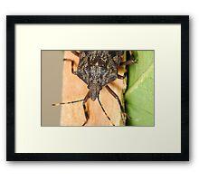 Bark Stink Bug Framed Print