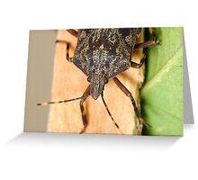 Bark Stink Bug Greeting Card