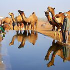 Camels and Reflections by Mukesh Srivastava