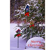 Christmas For the Birds Card Photographic Print