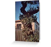 Close of tree sky and red house Greeting Card