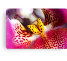 Flower macro orchid yellow pink Canvas Print