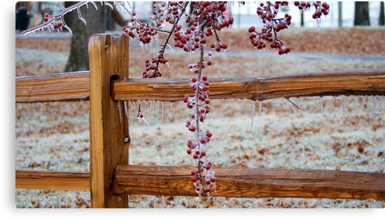 Winter Fences by Ruth Lambert