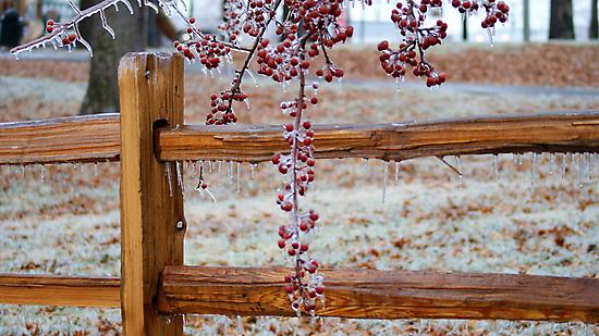 Winter Fences by Ruth Lambert