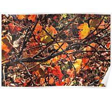 Fall Grape Leaves Poster