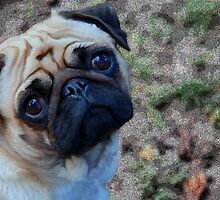Pensive Pug by Crayle